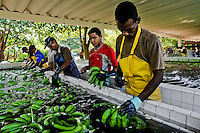 Colombian workers preparing bananas for packaging on the banana plantation in Aracataca, Colombia, 14 March 2006. Eighty percent of the exported bananas in the world are grown in Latin America. Local farms have no other alternative than to sell for a price offered by the multinational company. When working conditions and ecology is in question, the corporations do not have any responsibility as they do not own plantations. Local governments in the attempt of organizing banana export provide low duty taxes on export, they try to eliminate social and enviromental politics to attract the big companies to their countries.
