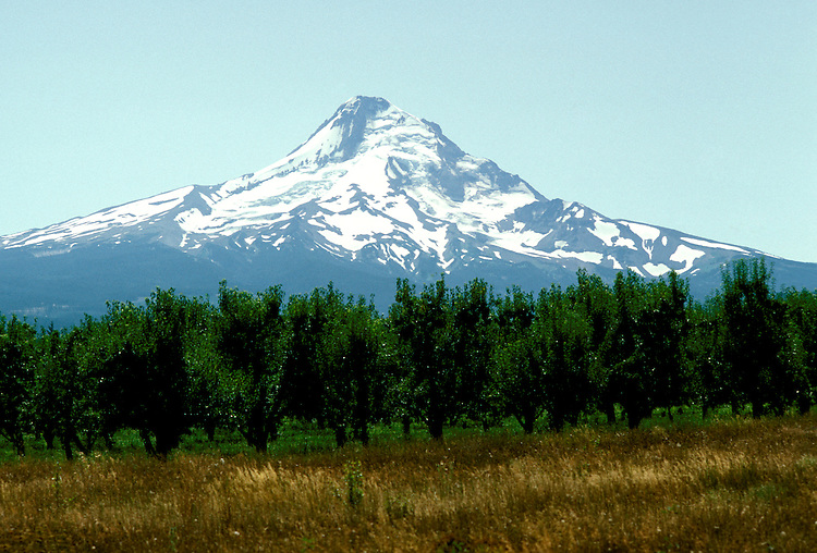 Oregon: Mt. Hood, orchards, Photo: orhood102  .Photo copyright Lee Foster, www.fostertravel.com, 510/549-2202, lee@fostertravel.com