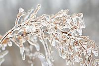 Frozen world Frozen world