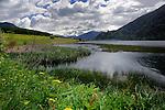 Boggy marsh habitat for ducks,Lake Resia, Italian/ Austrian border.