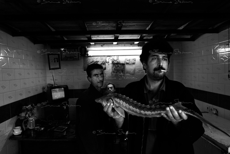 Mahmoudabad, Iran, March 26, 2007.The local fishmarket displays some of the Caspian sea's treasures....A young esturgeon.
