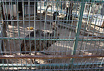 Birds are seen at a zoo in Khan Younis in the southern Gaza Strip, on January 31, 2015. The deaths of dozens of kinds of animals and birds in the garden of South Forest due to the Israeli aggression and the inability of the owner to reach her and look after her over 51 days due to the Israeli bombardment of the surroundings and the flight of the animals died from hunger and lack of interest and the owner estimated losses of millions of dollars, and died about 25 class and type of birds and animals. Photo by Abed Rahim Khatib