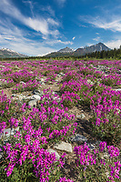 Alaska range mountains, Alaska.