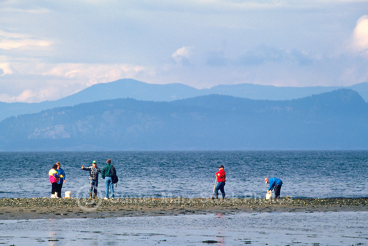 Rathtrevor Beach Provincial Park (Oceanside Region), Vancouver Island, BC, British Columbia, Canada - People digging for Clams on Beach