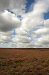 North Yorkshire moors, Yorkshire, England, Sep 2007.