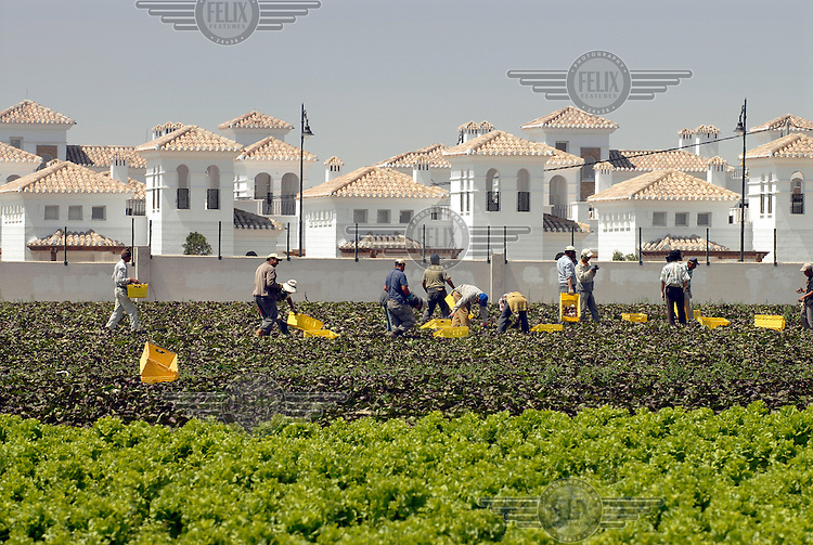 Moroccan vegetable pickers working in the fields beside the half completed Polaris World La Torre Golf Resort.  There has been an explosion of controversial golf resorts in Spain's arid south-east placing enormous pressure on the limited water supplies in the region.  .These walled developments are often built on former farming land sold by farmers to the big developers.  Most of these new houses are sold to foreign buyers as holiday homes.