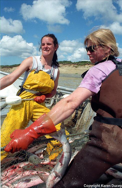 Corrie Morrison (left) and Lisa Krebs, pull in a sockeye salmon on Krebs' setnet site on Egegik River in Bristol Bay, Alaska in June 1996.  Bristol Bay is home to the world's largest sockeye salmon fishery.  The rivers also get a fair amount of chum, king, and chinook salmon.  Bristol Bay is located in the southwest part of Alaska.