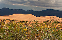 738900007 wild common sunflowers frame the dunes and mountains with storm clouds overhead in coral pink sand dunes state park utah