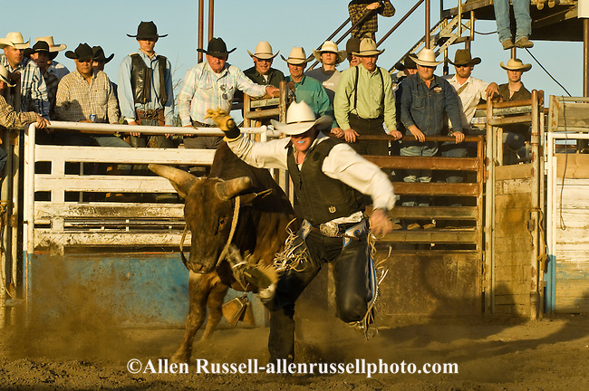 Cowboy Bull Rider runs from charging bucking bull after being bucked ...
