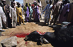 A cow killed in the Halal wa lies on the street, its blood draining from its throat into a hole. Dozens of children watch it die..The implementation of Islamic Sharia Law across the twelve northern states of Nigeria, centres upon Kano, the largest Muslim Husa city, under the feudal, political and economic rule of the Emir of Kano. Islamic Sharia Law is enforced by official state apparatus including military and police, Islamic schools and education, plus various volunteer Militia groups supported financially and politically by the Emir and other business and political bodies. Fanatical Islamic Sharia religious traditions  are enforced by the Hispah Sharia police. Deliquancy is controlled by the Vigilantes volunteer Militia. Activities such as Animist Pagan Voodoo ceremonies, playing music, drinking and gambling, normally outlawed under Sharia law exist as many parts of the rural and urban areas are controlled by local Mafia, ghetto gangs and rural hunters. The fight for control is never ending between the Emir, government forces, the Mafia and independent militias and gangs. This is fueled by rising petrol costs, and that 70% of the population live below the poverty line. Kano, Kano State, Northern Nigeria, Africa