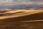 Washington, Palouse Valley.  Harvested and plowed fields  in the Palouse Valley