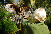 Dromoland Castle School of Falconry