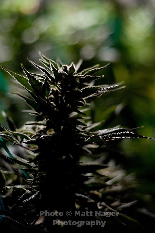 how to get medical marijuana perth