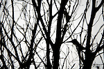 Close-up silhouette of tangled twigs and branches of a dying tree