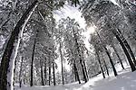 Flagstaff, AZ (Snow)