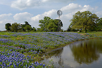 Windmill with Bluebonnets near a stock tank
