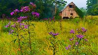 Ironweed Barn