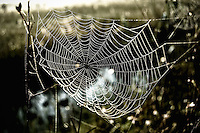 High contrast photograph of dewdrops sparkling on a spiderweb at dawn in the Florida Everglades.