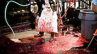 A slaughterer stands in a pool of blood from freshly killed beef cattle in a small family owned slaughter and meat packing company in Mead, Kansas. At this firm they typically slaughter ten animals each day but is one of only a few such sized companies in a region dominated by four giant meat packing plants that kill and process between five and six thousand cattle a day.