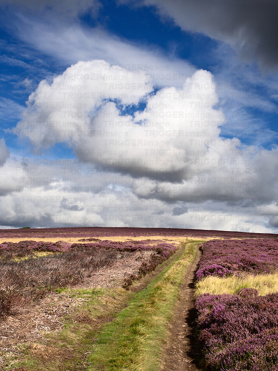 White Cloud Formation over Heather Moorland near Wooler Northumberland National Park England