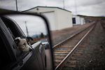 Former Montana Governor Brian Schweitzer's dog Jag hangs out of his truck while driving near Drummond, Montana, May 7, 2014.<br /> CREDIT: Max Whittaker/Prime for The Wall Street Journal<br /> BRIAN