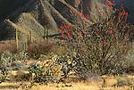 Baja Desert, Baja Peninsula, Mexico