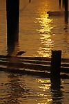 Silhouetted shorebird on logs on Elliott Bay at sunrise Seattle Washington State USA