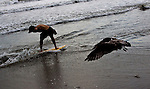 Boy rides the surf on a boogy board with a seagull.