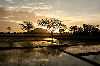 NOT TO BE SOLD TILL 2016 January for any use in Sri lanka Bought by Commercial Bank for 2015 CalendarSunrise behind the Galapita Tree House when it was surrounded by Paddy Fields.