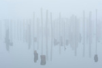 Mist and fog with old pilings
