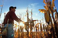 Farmer in corn field.