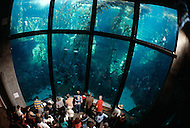 December 11, 1984 - Monterey Bay, California. Visitors watch marine life at the Monterey Bay Aquarium. The Monterey Bay Aquarium, located on Cannery Row of the Pacific Ocean in Monterey California, was founded in 1984 and holds thousands of plants and animals. The annual attendance of the aquarium is 1.8 million visitors.