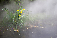 flowers in a pond as fog moves in