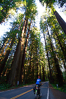 Touring Cyclist on Pacific Coast Route in Redwood National Park - California - USA