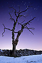 Dead tree in snow photographed with a long exposure at night, showing star trails. Peak District National Park, Derbyshire, UK. December.