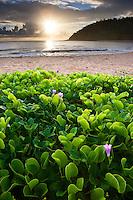 Sunrise with beautiful naupaka in the foreground at a beach on Kaua'i.