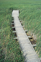 Bordwalk in Marsh in Point Pelee National Park