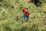 Chile, Lake Country: Canopying or ziplining adventure sport of sliding on a steel line through the canopy of the trees at Peulla.Photo #: ch625-33314..Photo copyright Lee Foster www.fostertravel.com, lee@fostertravel.com, 510-549-2202.