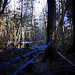 Blue plastic tape indicates the areas that have been searched for bodies in Aokigahara Jukai, better known as the Mt. Fuji suicide forest, which is located at the base of Japan's famed mountain west of Tokyo, Japan.