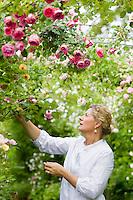 Grazia Adamo Giovannetti picking roses in her rose garden