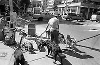 Walking dogs. Street scenes, Lower East Side, New York City, USA