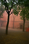 Trees in a courtyard with fog in Sienna, Italy