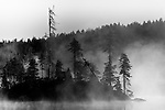A small island of trees on a lake covered in mist.