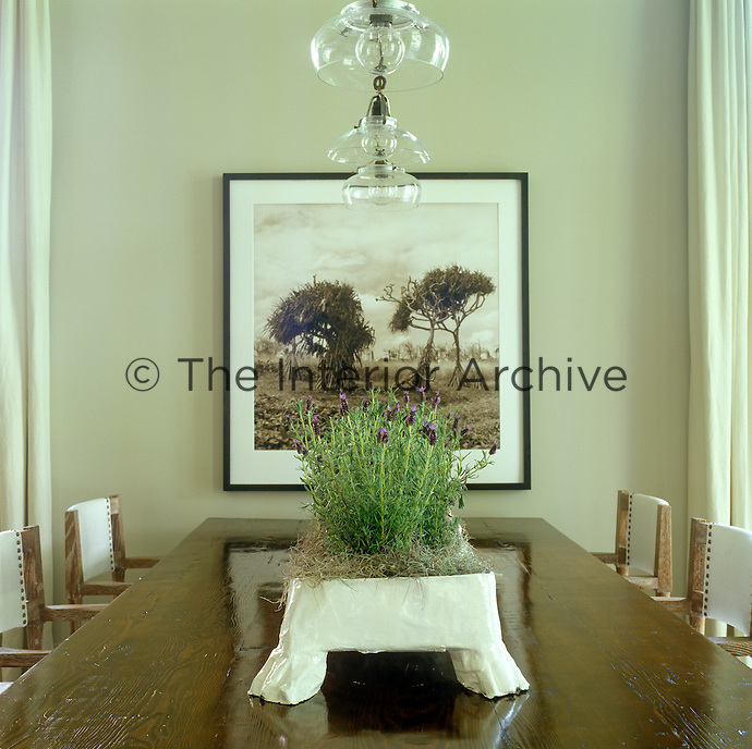 A container of planted lavender graces the wooden trestle table in the dining room with a photograph by David Halliday on the wall behind