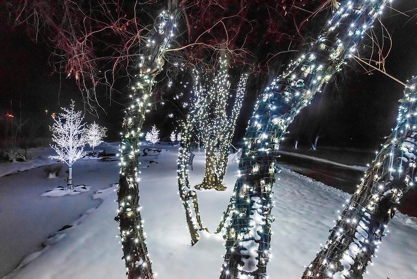 A Hudson Christmas Holiday Light Show At Hudson Gardens Littleton Colorado Usa Blaine