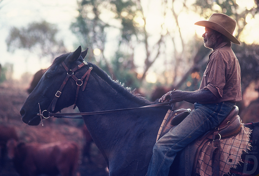 Abriginal Stockman mustering Cattle on Horseback Central Australia
