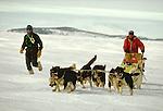 Huskies - working sled dogs