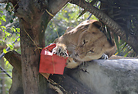 Animales reciben Regalo Reyes Magos / Zoo Animals receive Gif from Three Kings, Medellín, 10-01-2015