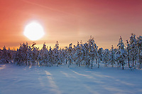 Snowy Trees and Winter Landscape Colored by Sunset, Estonia