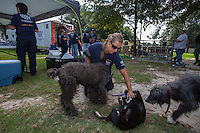 Sára Varsa, director of operations for The HSUS' Animal Rescue Team, plays with dogs at the vet tables during a raid on a puppy mill in Johnston, SC on Tuesday, Sept. 11, 2012. HSUS workers found over 200 dogs, nine horses and 30-40 fowl.